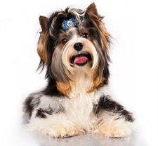 Хотите, чтобы Ваш щенок стал сильным, красивым и более активным?