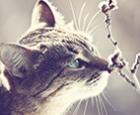Кот укол